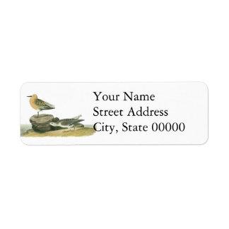 Red Knot, John Audubon Return Address Labels