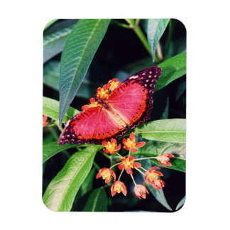 Red Lacewing Butterfly Magnet