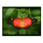 Red Lacewing Post Cards