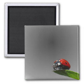 Red Lady Bug On Leaf - B&W Fading Background 2 Inch Square Magnet