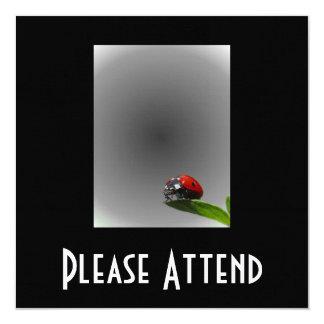 Red Lady Bug On Leaf - B&W Fading Background Card