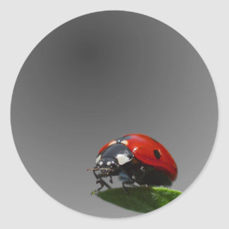 Red Lady Bug On Leaf - B&W Fading Background Classic Round Sticker