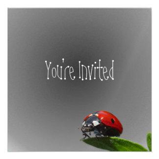 Red Lady Bug On Leaf - B W Fading Background Invite