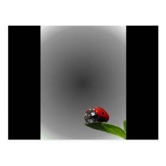 Red Lady Bug On Leaf - B W Fading Background Postcards