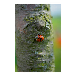 red ladybird at the trunk, close-up, posters