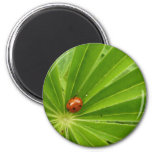 Red Ladybird on Lupin Leaf Magnet
