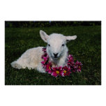 Red Lamb flowers Poster