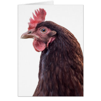 Red Layer Hen Tall Profile Photo Greeting Card