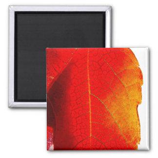 Red Leaf canvas Magnet