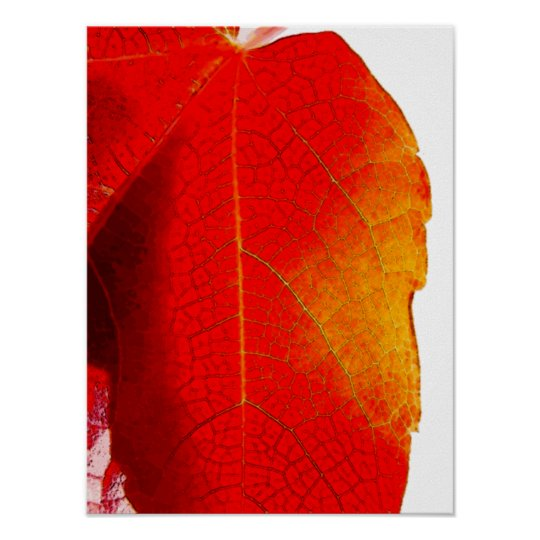 Red Leaf canvas Poster