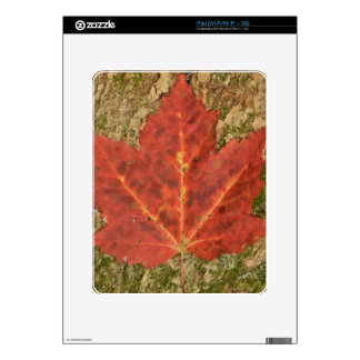Red Leaf Decal For The iPad