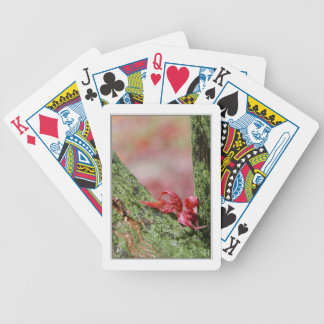 Red Leaf in Balance Bicycle Playing Cards