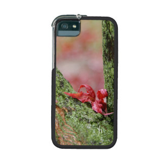Red Leaf in Balance iPhone 5/5S Case