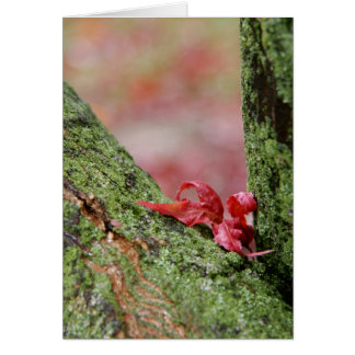 Red Leaf in Balance (Vertical) Card