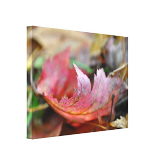 Red Leaf in the Fall Color Photo Canvas Print