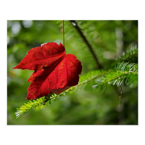 Red Leaf Macro // High Resolution Photo