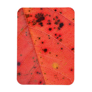 Red Leaf Macro Rectangular Photo Magnet