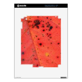Red Leaf Macro iPad 2 Decals