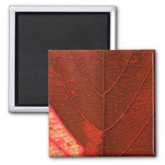 Red Leaf 2 Inch Square Magnet