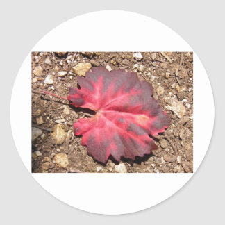 Red Leaf on a path Classic Round Sticker