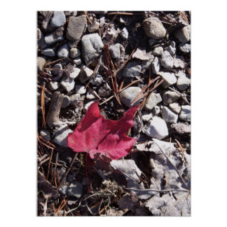 Red Leaf on the Forest Floor Poster