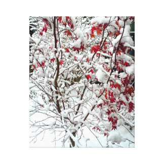 RED LEAF SNOW canvas