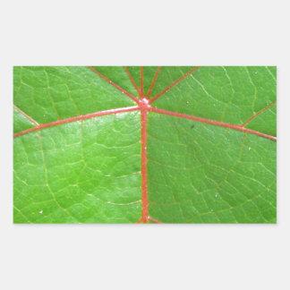 Red Leaf Veins Rectangular Sticker