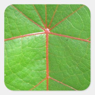 Red Leaf Veins Square Sticker