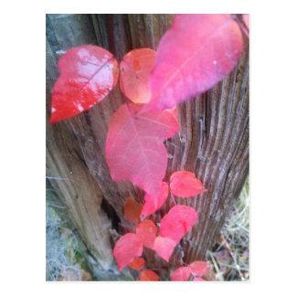 red leaf vine on fencepost from above.jpg postcard
