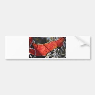 Red leaf with Spanish Moss Car Bumper Sticker