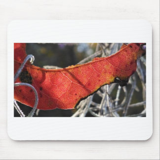 Red leaf with Spanish Moss Mouse Pad