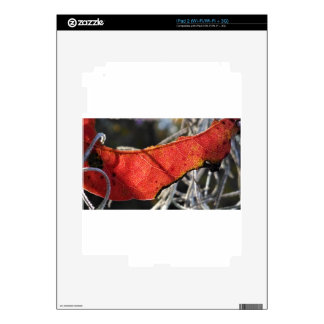 Red leaf with Spanish Moss iPad 2 Decal