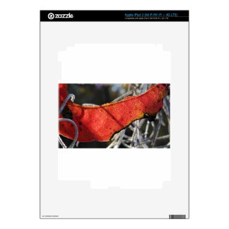 Red leaf with Spanish Moss iPad 3 Skins
