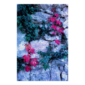 Red leaves and rocks poster