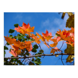 Red Leaves Blue Sky Postcard