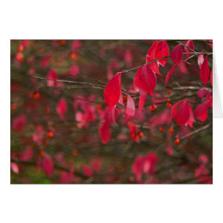 """""""RED LEAVES"""" CARD"""