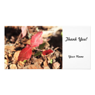 Red Leaves Card