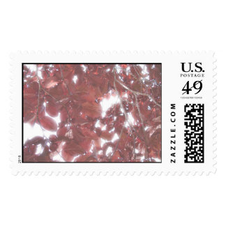 Red leaves, fun leaves stamp