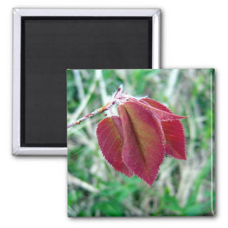 Red Leaves Magnet