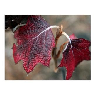 Red Leaves Postcard