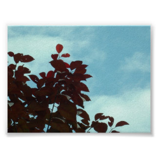 Red Leaves Posters