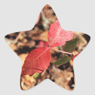 Red Leaves Sticker