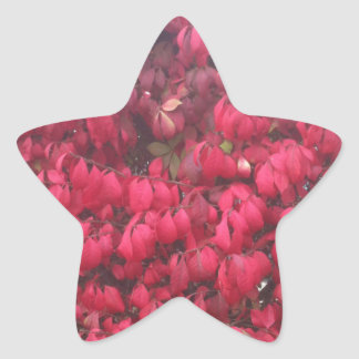 Red leaves star stickers