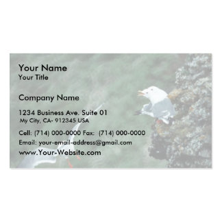Red-legged Kittiwake Colony Business Cards