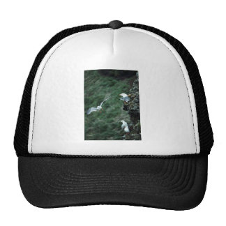 Red-legged Kittiwake Colony Hat