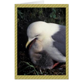 Red-legged Kittiwake Feeding Young Greeting Cards