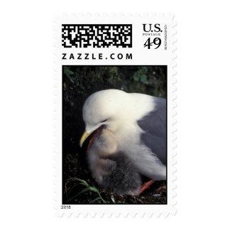 Red-legged Kittiwake Feeding Young Stamp
