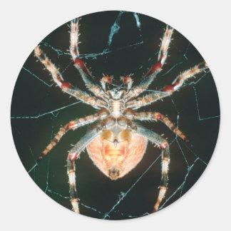 Red-Legged Orb-Web Spider Classic Round Sticker