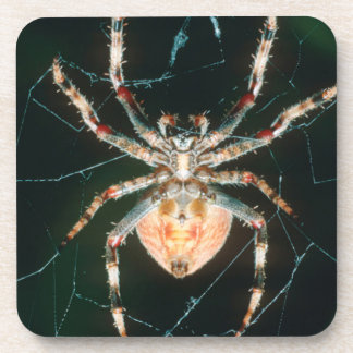 Red-Legged Orb-Web Spider Coaster