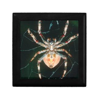 Red-Legged Orb-Web Spider Keepsake Box